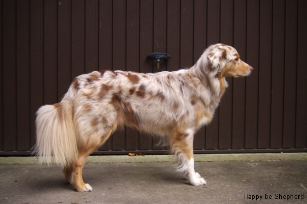 Вес собаки и анатомия для работы/спорта - Страница 3 Peach3J.JPG-nggid0224-ngg0dyn-0x0x100-00f0w011c011r110f110r010t010